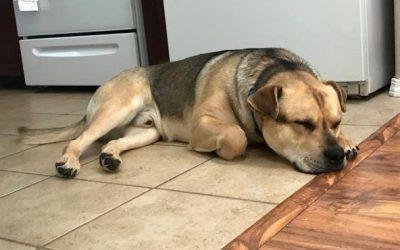 Meridian Canine Rescue Seeks Furever Homes!